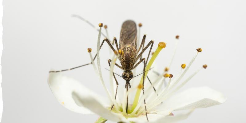 Wetland Mosquito Survey Handbook