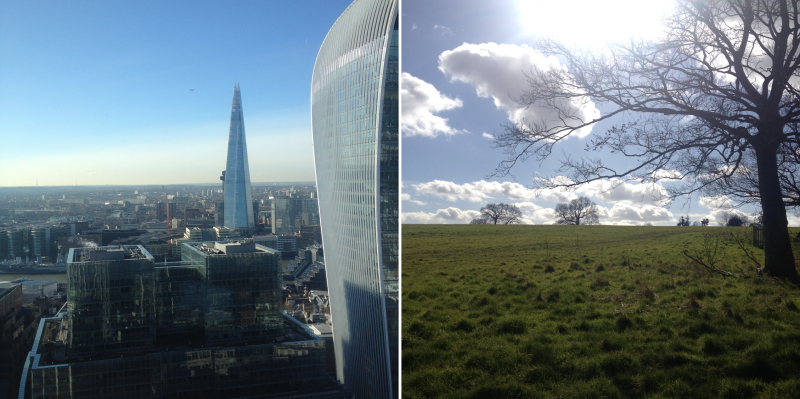 The Valuing Nature Business Impact School's contrasting venues: the heart of London's business district (the view from Willis Towers Watson building) and Windsor Great Park. Photo @Prue Addison