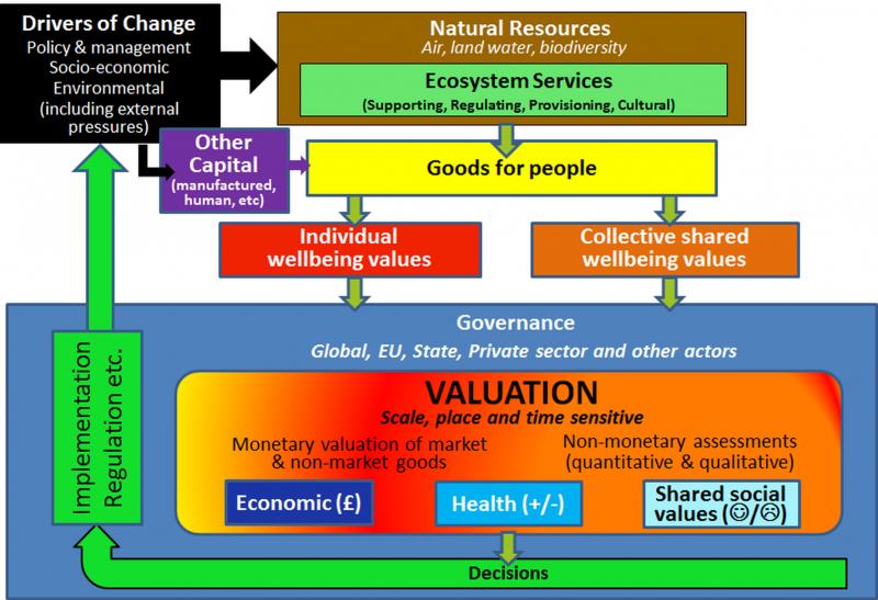 VNN1 conceptual model